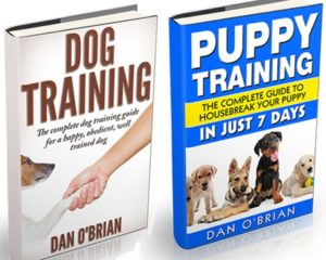 Dog and Puppy Training